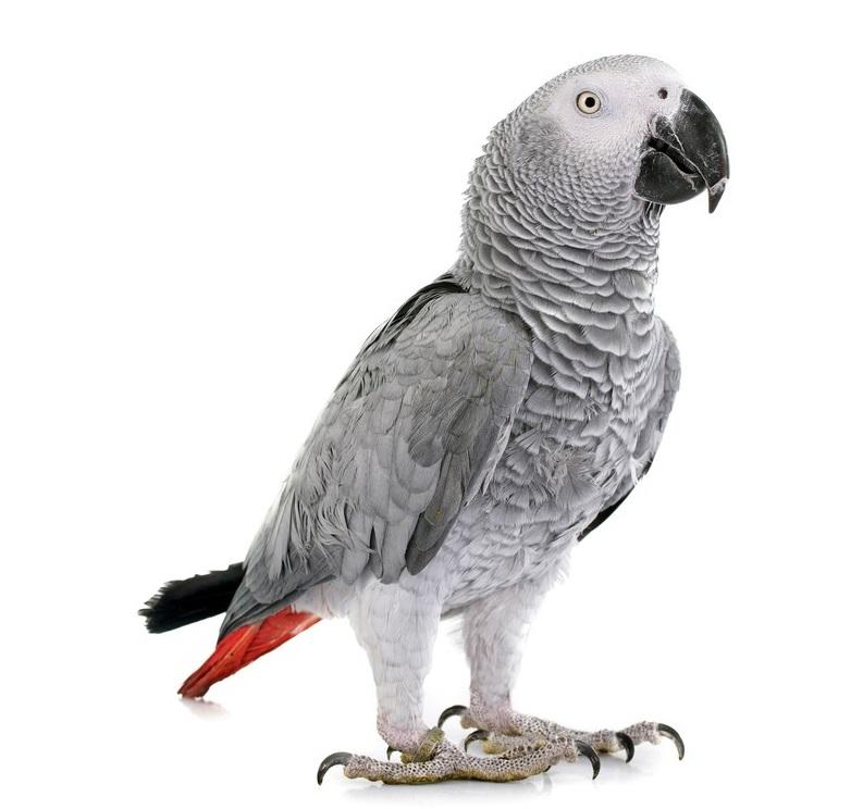 Parrot Registration